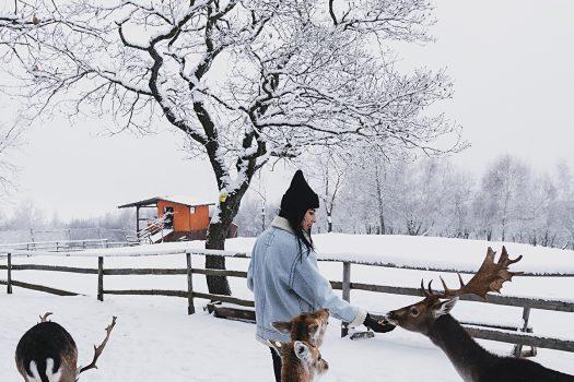 Winter Wonderland -march edition-